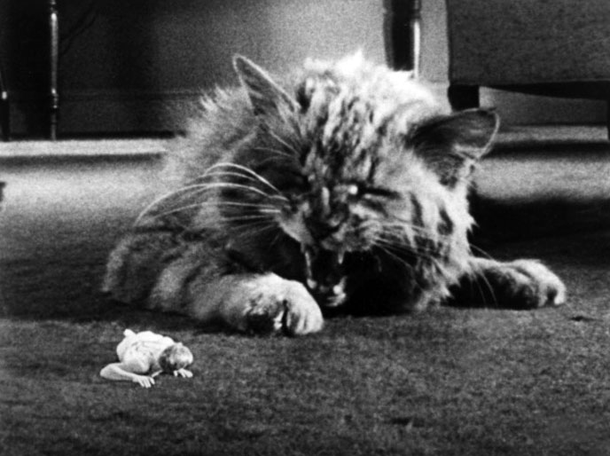 Photo de 'L'homme qui rétrecit' - ©1957 Universal International Pictures - L'homme qui rétrecit (The Incredible Shrinking Man) - cliquez sur la photo pour la fermer